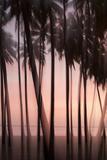 The Pink Light of Sunset Illuminate Palms in the Kapuaiwa Coconut Grove, Molokai, Hawaii Fotografisk trykk av Jonathan Kingston