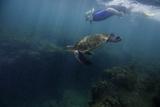 A Snorkeler Swimming with a Green Sea Turtle Reproduction photographique par Jad Davenport