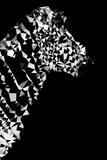 Low Poly Safari Art - Zebra Profile - Black Edition II Print by Philippe Hugonnard