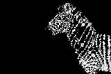 Low Poly Safari Art - Zebra - Black Edition Poster by Philippe Hugonnard
