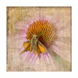 Meely Moth Print by Romona Murdock