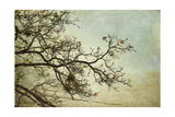 Branches Prints by Romona Murdock