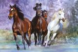 Bob Langrish: Running Wild Kunstdruck von Bob Langrish