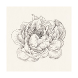 Pen and Ink Florals V Premium Giclee Print by Danhui Nai