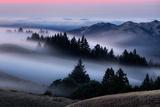 Sweet Post Sunset Light and Fog, Hills of Mount Tam, Northern California Fotografie-Druck von Vincent James