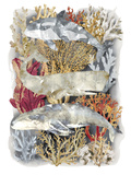 Coral Island Reproduction procédé giclée par Tania Bello