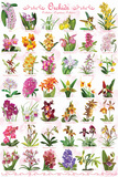 Orchids Collage Affiches
