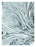 Mushroom Gills II Giclee Print by Naomi McCavitt