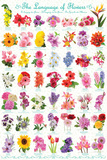 The Language Of Flowers Affiches