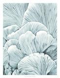Mushroom Gills I Giclee Print by Naomi McCavitt