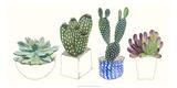 Four Succulents II Kunstdrucke von Melissa Wang