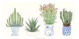 Four Succulents I Affiche par Melissa Wang