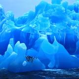 Bearded Penguin, Chinstrap Penguin (Pygoscelis Antarctica, Pygoscelis Antarcticus), Antarctica Fotografie-Druck von  Blickwinkel