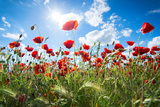 A Large Field of Poppies Near Newark in Nottinghamshire, England Uk Stampa fotografica di Tracey Whitefoot