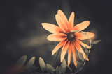 Summer Flower Fotografisk trykk av Alexey Rumyantsev