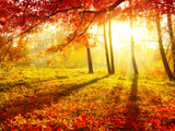 Autumnal Park. Autumn Trees and Leaves. Fall Fotografie-Druck von Subbotina Anna