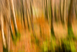 Abstract Shot of Autumnal Woodland in Grasmere, Lake District Cumbria England Uk Photographic Print by Tracey Whitefoot