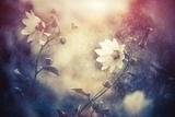Summer Flowers under Rain Fotografisk trykk av Alexey Rumyantsev