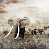 Grunge Image of Walking Elephants Reproduction photographique par Svetlana Foote