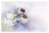 Ladybirds Prints by Ellen Van Deelen