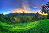 Indonesia, Bali, Ubud, Ceking Rice Terraces Lámina fotográfica por Michele Falzone