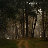 Beautiful Morning in the Misty Autumn Forest Fotografisk trykk av Taras Lesiv