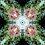 A Floral Mandala Montage Photographic Print by  Trigger Image
