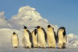 Emperor Penguins Group Family Aptenodytes Forsteri Antarktis Antarctica Dawson Lambton Glacier Fotografie-Druck von Top-Pics Tbk