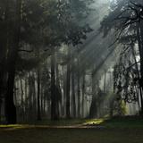 Misty Autumn Forest with Pine Trees Reproduction photographique par Taras Lesiv
