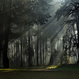 Misty Autumn Forest with Pine Trees Photographic Print by Taras Lesiv