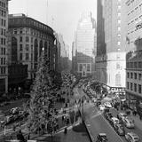 Christmas Tree on 52nd Street Next to Gimbels Department Store, New York, NY, 1940S Fotografie-Druck von Nina Leen