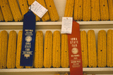 1955: First and Second Place Ribbon-Winning 'Field Corn' Entries at the Iowa State Fair Fotografisk trykk av John Dominis