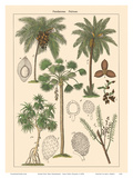 Screw-Pine Tree (Pandaneae) - Palm Trees (Palmae) Poster par  Pacifica Island Art