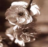 Fleurs II Affiches par Unknown