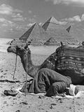 Prayer in Front of the Pyramids of Giza, 1942 Fotografisk tryk af Scherl Süddeutsche Zeitung Photo