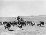 Cowboy in the Usa, 1928 Fotografisk trykk av  Süddeutsche Zeitung Photo