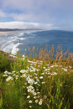 Wildflowers Along Yaquina Head; Newport Oregon United States of America Stretched Canvas Print by  Design Pics Inc
