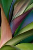 Abstract Floral of a Bird of Paradise Plant Bedruckte aufgespannte Leinwand von Vickie Lewis