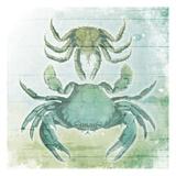 Sea Foam Crabs Plakat af Jace Grey
