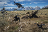 A grizzly bear fends off ravens to feed on a bison carcass. Fotografisk trykk av Charlie Hamilton James