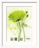 Coquelicot Vert I Posters by  Marthe