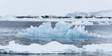 Blue Ice Floats in Neumayer Channel, Antarctica Photographic Print by Jeff Mauritzen
