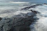 Sally Lightfoot Crabs Cling to the Volcanic Coastline of Santiago Island Impressão fotográfica por Jeff Mauritzen