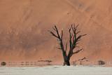 An Acacia Tree and Sand Dune in Namibia's  Namib-Naukluft National Park Impressão fotográfica por Alex Saberi