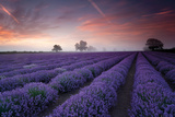 Lavender Field At Dawn Print