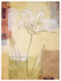 TULIP STUDY I Poster by Julianne Marcoux
