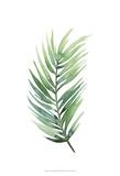 Untethered Palm I