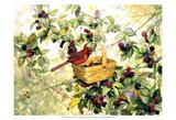Berry Picker Posters par Marcia Matcham