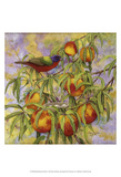 Painted Bunting & Peaches Affiches par Marcia Matcham