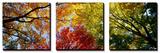 Kleurrijke bomen in de herfst van onderaf gefotografeerd Schilderij